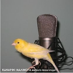 CD φωνής Καναρινιού Μαλινουά