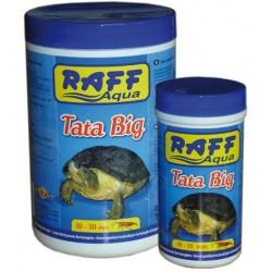Raff Turtles - Tata Gammarus Big