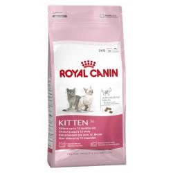 Royal Canin Kitten 36