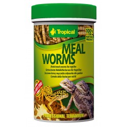 Tropical  Dried Mealworms