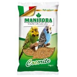 Manitoba Cocorite Biscuit