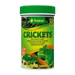 Tropical Crickets
