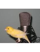 CD φωνών πουλιών