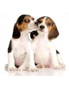 Προϊόντα για Σκύλους